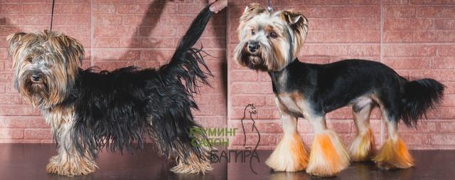 Стрижка йорка Прически собак.
