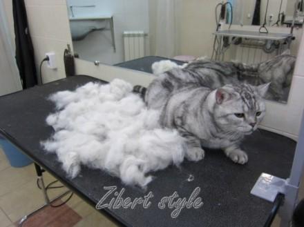 Прически кошек вычесывание кошки